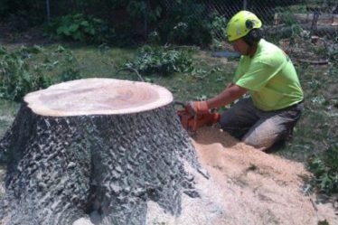 tree removal service austin