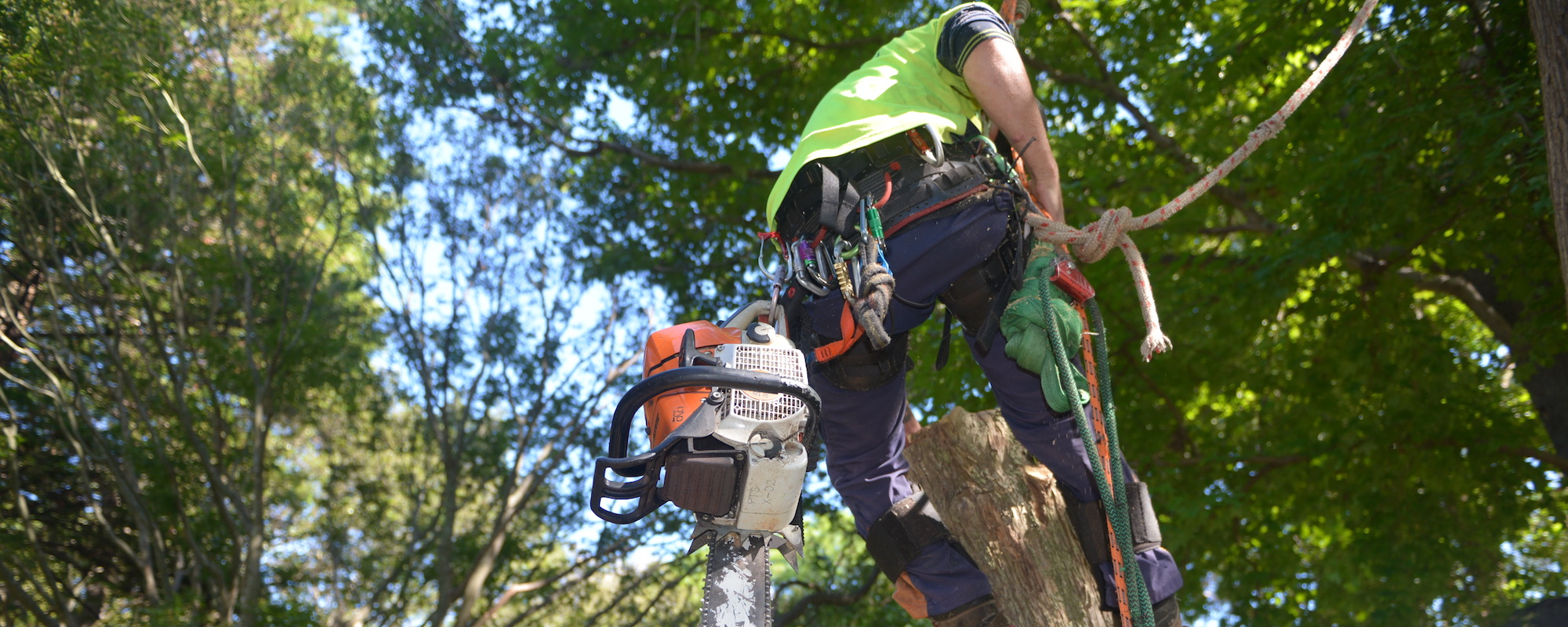 arborist training near me